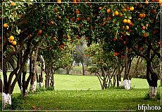 Green Garden Rezidence